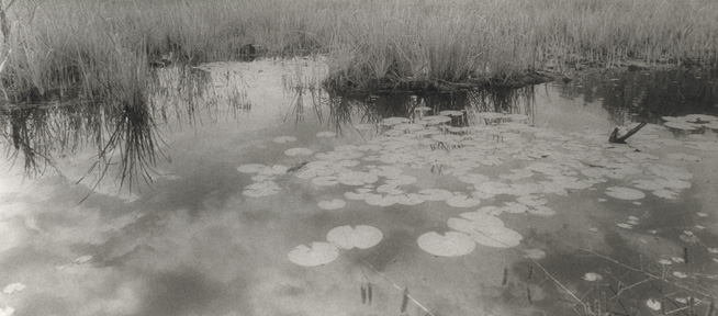 Clouds with Lily Pads by Harriet Blum
