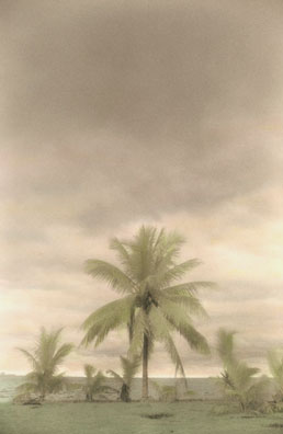 Palms on a Cloudy Day by Harriet Blum