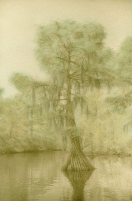 Cypress, Cane Bayou by Harriet Blum