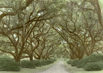The Oaks Plantation by Harriet Blum